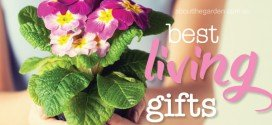 Best plants for gift giving
