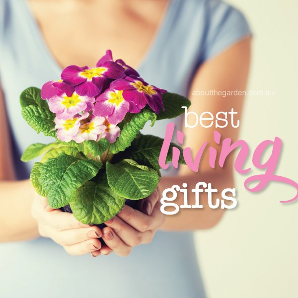 Best plants for gift living #aboutthegardenmagazine.indd