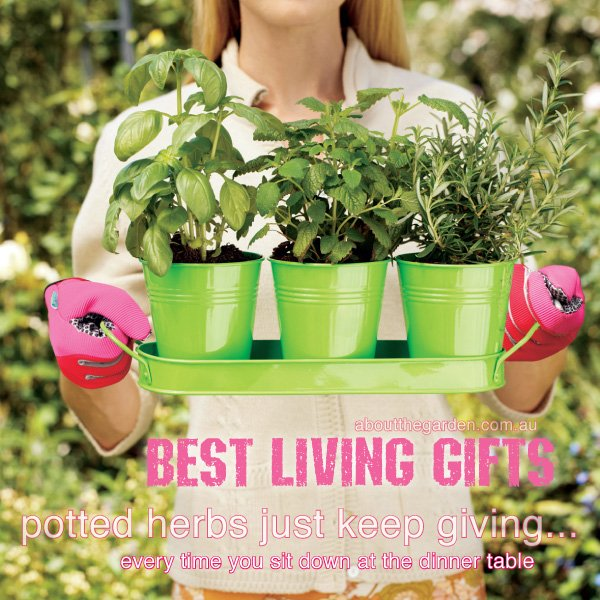 Best plants for gifts varieties in Australia 2 #aboutthegardenma