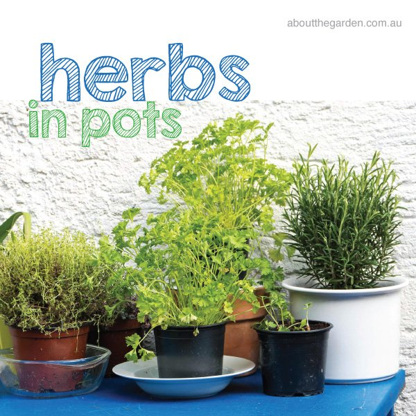 Herbs in pots idea #aboutthegardenmagazine.indd