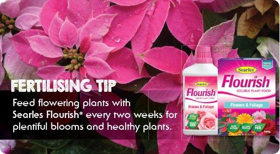 Searles Flourish fertiliser best fertiliser for flowers.indd