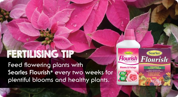 Searles Flourish fertiliser best fertiliser for flowers.indd