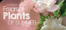 Fragrant Plants for Summer Gardens