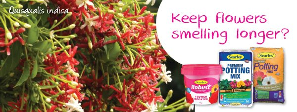 Gardening Products for growing fragrant plants in Australia home