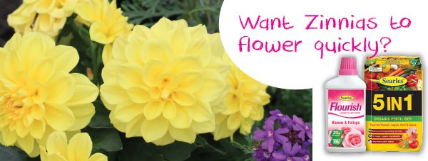 Gardening Products for growing zinnias in Australia home.indd