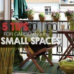 5 tips for gardening in a small space #aboutthegardenmagazine.in