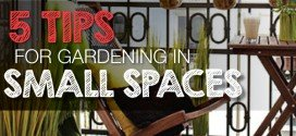 5 Tips for gardening in a small space