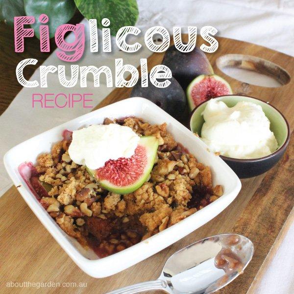 Fig Crumble dessert #recipe #garden #aboutthegarden.com.au.indd