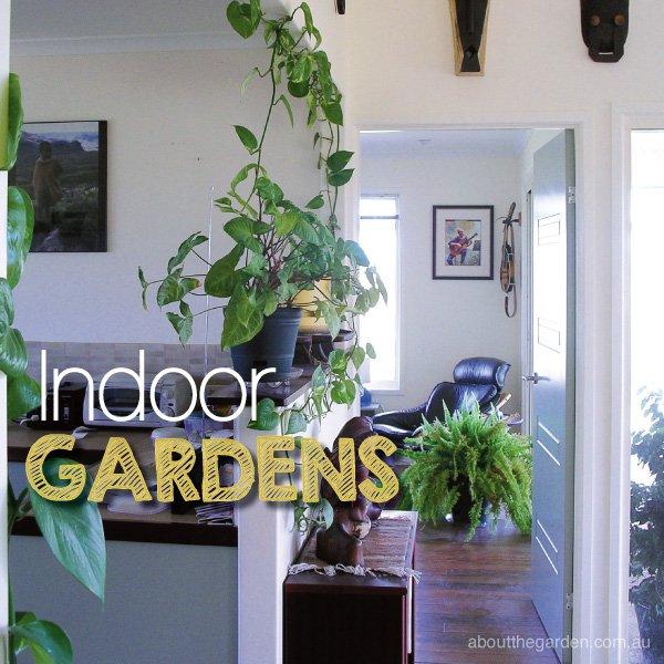 Indoor Garden Ideas Indoor Plants #indoorgardens #aboutthegarden
