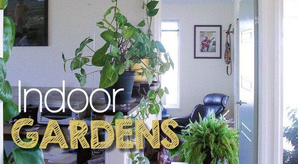 Best Indoor Plants Create Garden Sanctuary
