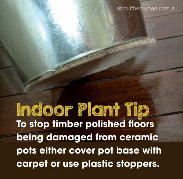 Indoor Plant Gardening Tip #indoorplantproblemsolver #indoorgard