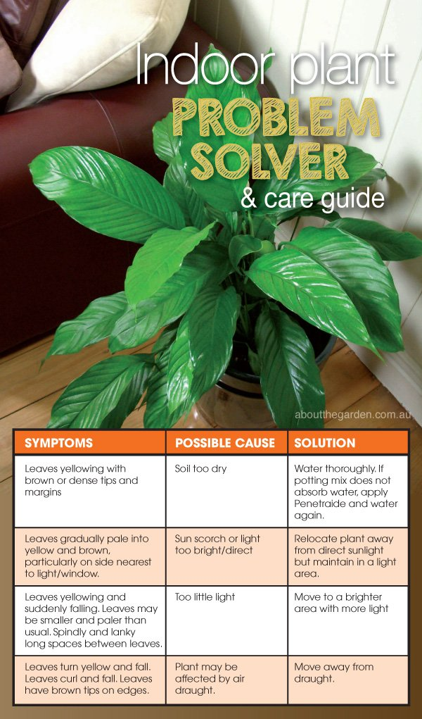 Indoor Plant Problem Solver and Care Guide | About The Garden Magazine