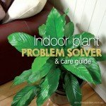 Indoor Plant Problem Solver and care guide #indoorplantproblemso