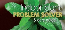 Indoor Plant Problem Solver and Care Guide