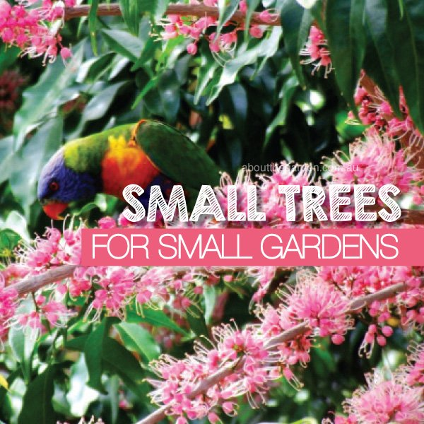 As Suburban Gardens Become Increasingly Smaller With Each Passing Year, It  Can Become Difficult To Choose Small Trees To Fit Into These Smaller Gardens,  ...