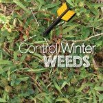 Control Winter weeds in Australia #aboutthegardenmagazine.indd