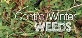 How to control common Winter weeds