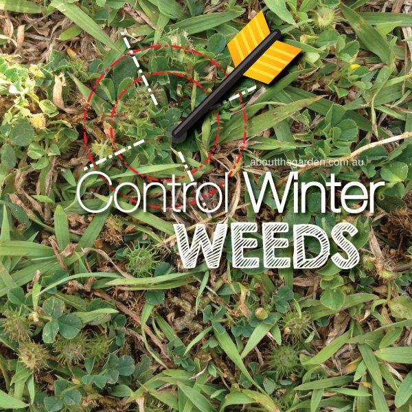 Control Winter weeds in Australia #aboutthegardenmagazine.indd