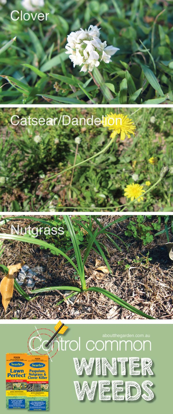 Control common Winter weeds in Australia weed control solution #