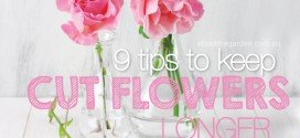 9 tips to keep cut flowers flowering longer