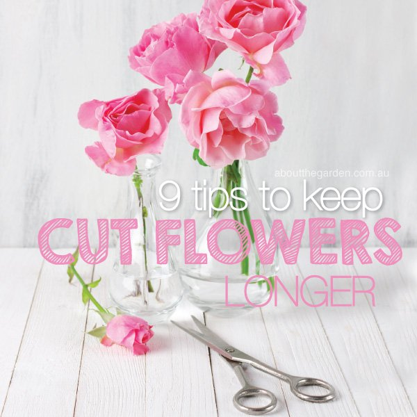 9 tips for how to keep cut flowers flowering longer in Australia