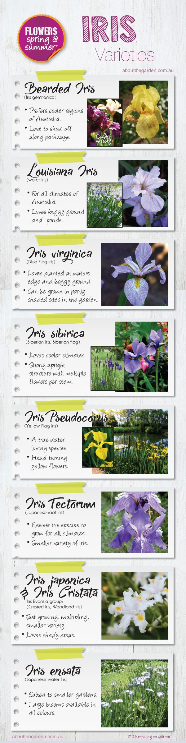 Iris varieties for Australian gardens #aboutthegardenmagazine.in