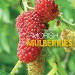 Mulberries growing in Australia #aboutthegardenmagazine.indd