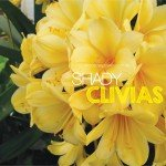 Shade loving Clivias in Australia #aboutthegardenmagazine.indd