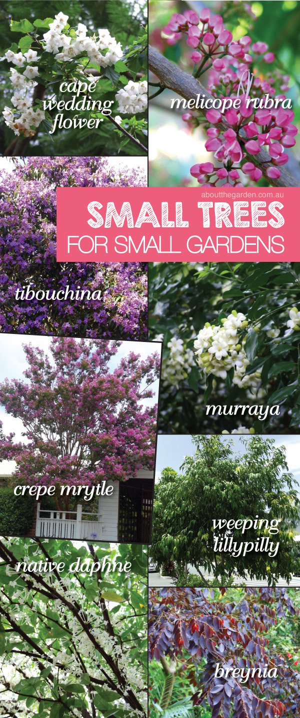 Small Native Trees For Small Gardens Plant Varieties In Australi