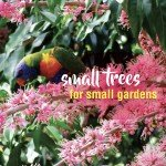 Small trees for small gardens plant ideas in Australia 2 #aboutthegardenmagazine