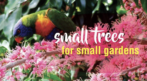 Small trees in small gardens – About The Garden Magazine