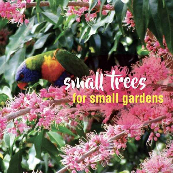 Small trees for small gardens plant ideas in Australia 2 #aboutthegardenmagazine