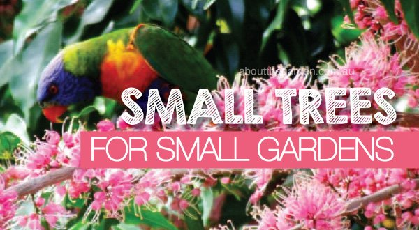 About the garden magazine garden centres for Small garden trees queensland