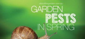 Spring garden pests to control