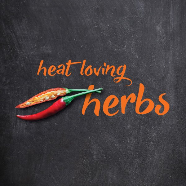 Herbs that love the heat in Australia #aboutthegardenmagazine.in