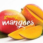 How to grow, plant and fertilise mangoes in Australia #abouttheg