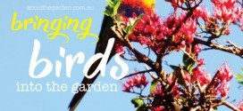 Best plants to bring birds to your garden