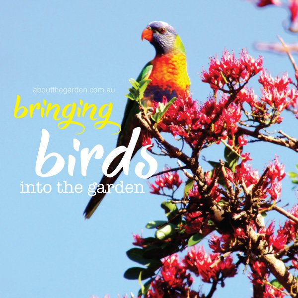 Plant guide to bring birds into the garden for Australian garden