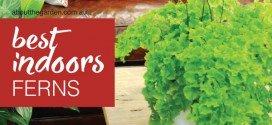 Best Indoor ferns guide for indoor greenery