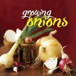 How to grow, plant harvest onions in Australia #aboutthegardenma