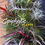 Epiphytic plants in Australia 2 #aboutthegardenmagazine.indd