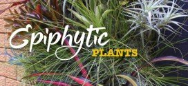 Epiphytic plants – Air plants – no soil plants