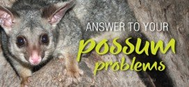 Deter possums from around the home and backyard