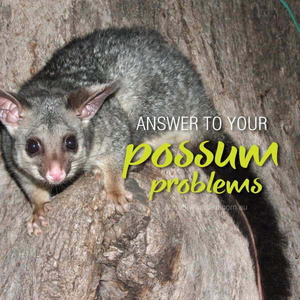 Deter Possums in the home garden and around the house #abouttheg