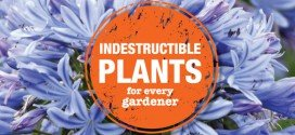 Indestructible plants – Hard to kill plants