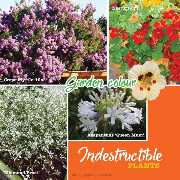 Hard to kill plants - easy care plants #aboutthegardenmagazine.i