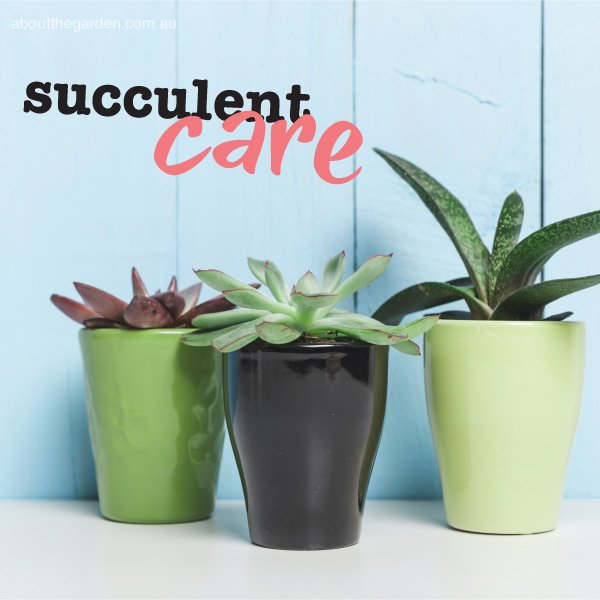 Succulent plant care in Australia #aboutthegardenmagazine.indd