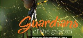 Guardians of the garden – Beneficial (predatory) backyard insects