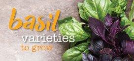 Basil varieties to grow