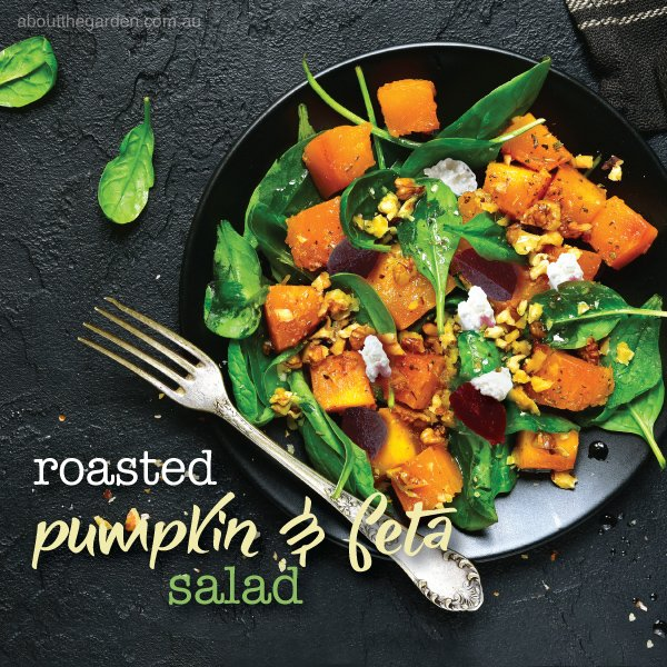 Roasted pumpkin and feta salad recipe.indd